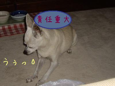 20071110190651.jpg