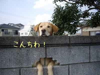 20071111224152.jpg