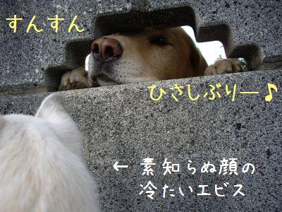 20071111230013.jpg
