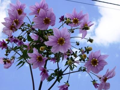名前不明の花2