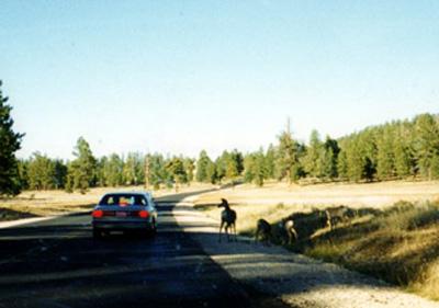 ブライスキャニオン内の道路