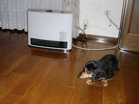 2007_1116kikiburogu0009.jpg