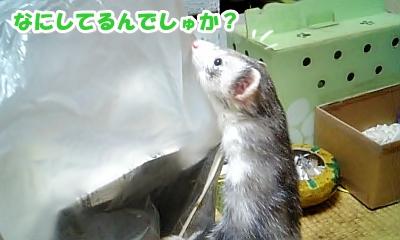 興味津々☆