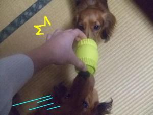 2007 12.30 実家 トト& 002