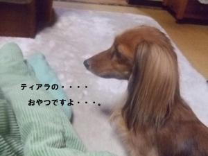2007 12.30 実家 トト& 005