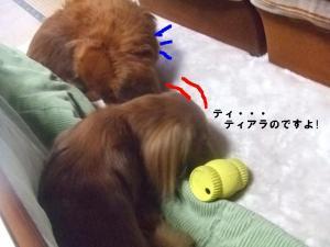 2007 12.30 実家 トト& 006