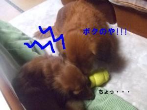 2007 12.30 実家 トト& 007