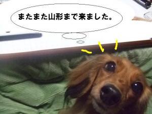 2007 12.30 実家 トト& 012