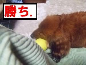 2007 12.30 実家 トト& 013