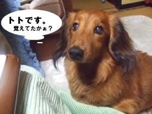 2007 12.30 実家 トト& 014