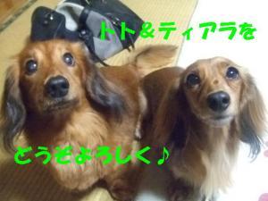 2007 12.30 実家 トト&thiara2 056