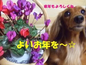 2007 12.30 実家 トト&thiara2 194