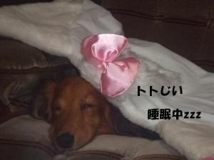 2007 12.30 実家 トト&thiara2 102
