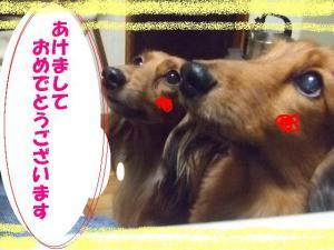 2007 12.30 実家 トト&thiara2 040
