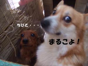 2007 12.30 実家 トト&thiar3 067