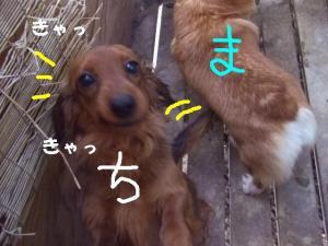 2007 12.30 実家 トト&thiar3 059