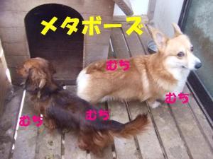 2007 12.30 実家 トト&thiar3 069