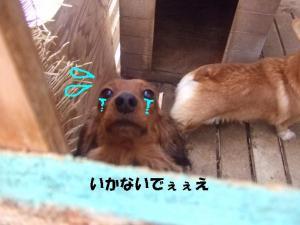 2007 12.30 実家 トト&thiar3 064