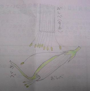 スイートピー構造図