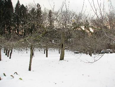林檎畑061222