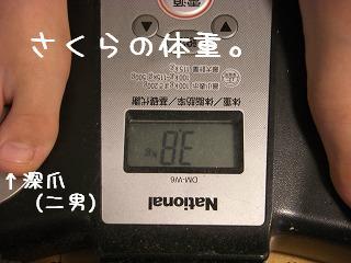 さくら体重0108