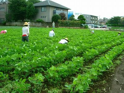 吉田農園 大豆畑070731