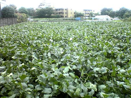 大豆レボ・吉田農園 20070910_001