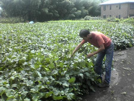 大豆レボ・吉田農園 20070910_003