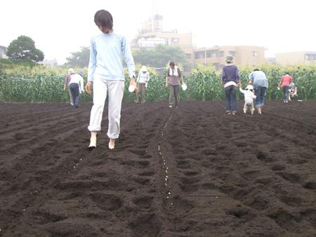 吉田農園 種まき