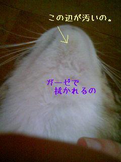 つんちゃんのあご PA0_0049-080807