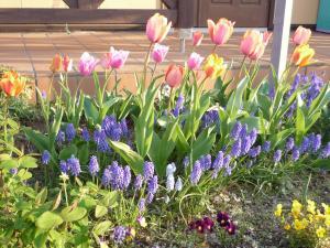 おうちの花壇