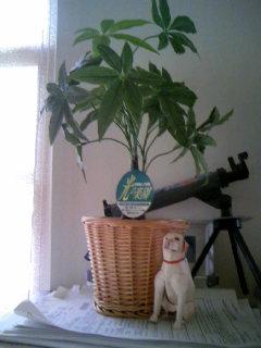 光触媒 観葉植物