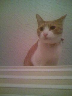 ここは、風呂ふたの上