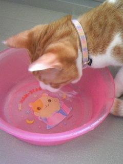 朝いちにかあちゃんに入れさせた洗面器の水はおいしいわ