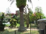 7mのカナリー椰子・石楠花