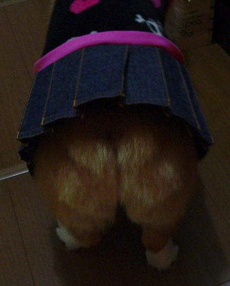 萌えショット1