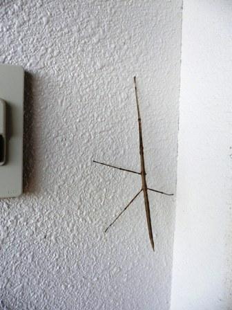 これは虫です