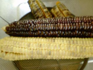 トウモロコシ白黒