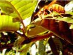 キイロスズメバチは毛深い
