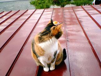 名残惜しそう?な猫