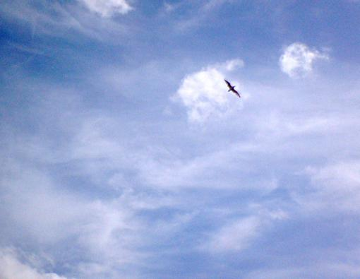 空飛ぶカモメ(岩見川上空)