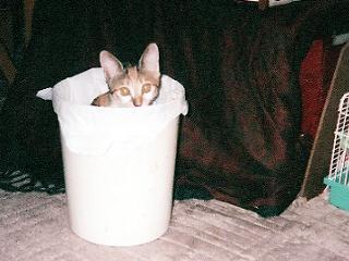 一番小さい頃の猫