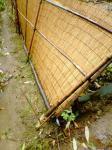 倒れた簾垣(畑側から)