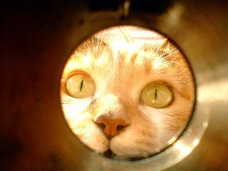猫はなぜ穴を覗くのか