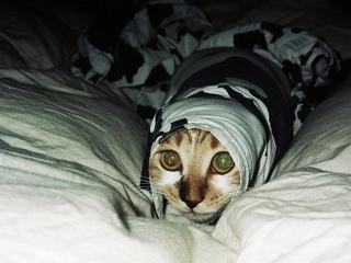 猫はなぜ狭いところが好きなのか