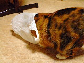 猫はなぜ袋に入りたがるのか