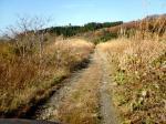 岩見川土手沿いの道