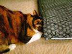 061205座布団と猫