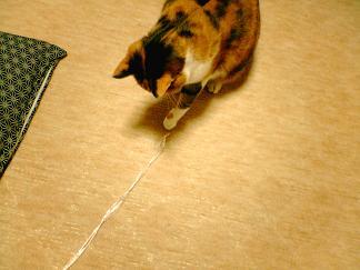 061205 猫に紐