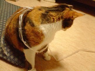 061201 猫に紐
